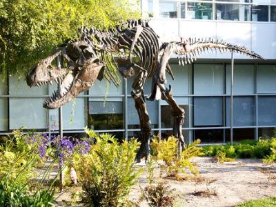 dinosaure google